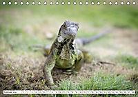 Ecuadors Tierwelt (Tischkalender 2019 DIN A5 quer) - Produktdetailbild 2
