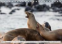 Ecuadors Tierwelt (Tischkalender 2019 DIN A5 quer) - Produktdetailbild 3
