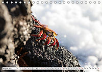 Ecuadors Tierwelt (Tischkalender 2019 DIN A5 quer) - Produktdetailbild 8