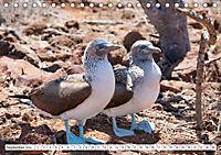 Ecuadors Tierwelt (Tischkalender 2019 DIN A5 quer) - Produktdetailbild 9