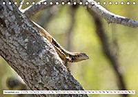 Ecuadors Tierwelt (Tischkalender 2019 DIN A5 quer) - Produktdetailbild 12
