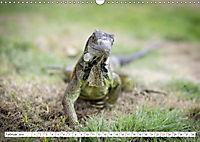 Ecuadors Tierwelt (Wandkalender 2019 DIN A3 quer) - Produktdetailbild 2