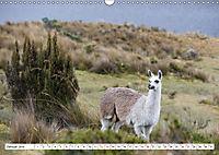 Ecuadors Tierwelt (Wandkalender 2019 DIN A3 quer) - Produktdetailbild 1