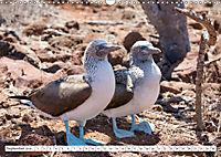 Ecuadors Tierwelt (Wandkalender 2019 DIN A3 quer) - Produktdetailbild 9