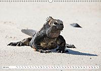Ecuadors Tierwelt (Wandkalender 2019 DIN A3 quer) - Produktdetailbild 7