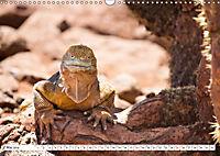 Ecuadors Tierwelt (Wandkalender 2019 DIN A3 quer) - Produktdetailbild 5