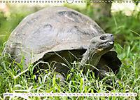 Ecuadors Tierwelt (Wandkalender 2019 DIN A3 quer) - Produktdetailbild 6