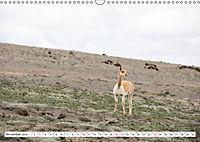 Ecuadors Tierwelt (Wandkalender 2019 DIN A3 quer) - Produktdetailbild 11