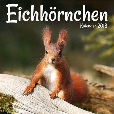 Eichhörnchen Broschurkal. 2018