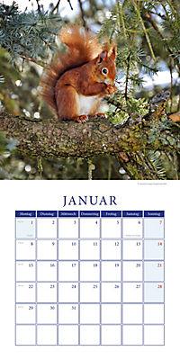 Eichhörnchen Broschurkal. 2018 - Produktdetailbild 1