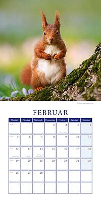 Eichhörnchen Broschurkal. 2018 - Produktdetailbild 2