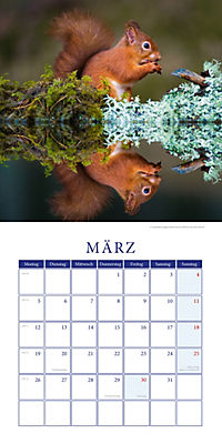 Eichhörnchen Broschurkal. 2018 - Produktdetailbild 3