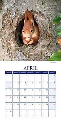 Eichhörnchen Broschurkal. 2018 - Produktdetailbild 4