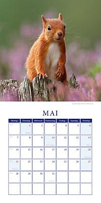 Eichhörnchen Broschurkal. 2018 - Produktdetailbild 5