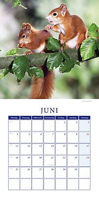 Eichhörnchen Broschurkal. 2018 - Produktdetailbild 6