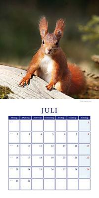 Eichhörnchen Broschurkal. 2018 - Produktdetailbild 7