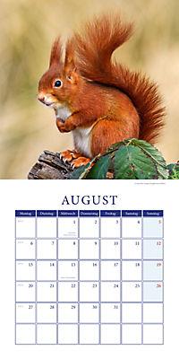 Eichhörnchen Broschurkal. 2018 - Produktdetailbild 8