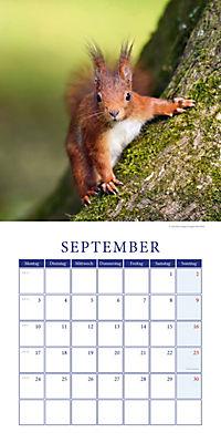 Eichhörnchen Broschurkal. 2018 - Produktdetailbild 9