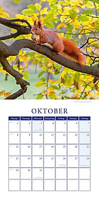 Eichhörnchen Broschurkal. 2018 - Produktdetailbild 10
