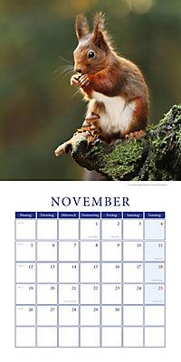 Eichhörnchen Broschurkal. 2018 - Produktdetailbild 11