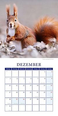 Eichhörnchen Broschurkal. 2018 - Produktdetailbild 12