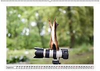 Eichhörnchen - Hast du Nüsschen mache ich Männchen (Wandkalender 2019 DIN A2 quer) - Produktdetailbild 8