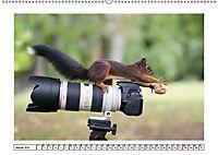 Eichhörnchen - Hast du Nüsschen mache ich Männchen (Wandkalender 2019 DIN A2 quer) - Produktdetailbild 1
