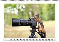 Eichhörnchen - Hast du Nüsschen mache ich Männchen (Wandkalender 2019 DIN A2 quer) - Produktdetailbild 5