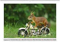 Eichhörnchen - Hast du Nüsschen mache ich Männchen (Wandkalender 2019 DIN A2 quer) - Produktdetailbild 9