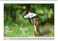Eichhörnchen - Hast du Nüsschen mache ich Männchen (Wandkalender 2019 DIN A2 quer) - Produktdetailbild 7