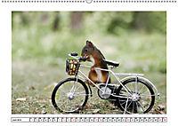 Eichhörnchen - Hast du Nüsschen mache ich Männchen (Wandkalender 2019 DIN A2 quer) - Produktdetailbild 6