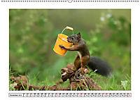 Eichhörnchen - Hast du Nüsschen mache ich Männchen (Wandkalender 2019 DIN A2 quer) - Produktdetailbild 11