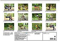 Eichhörnchen - Hast du Nüsschen mache ich Männchen (Wandkalender 2019 DIN A2 quer) - Produktdetailbild 13