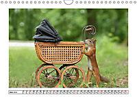 Eichhörnchen - Hast du Nüsschen mache ich Männchen (Wandkalender 2019 DIN A4 quer) - Produktdetailbild 3