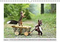 Eichhörnchen - Hast du Nüsschen mache ich Männchen (Wandkalender 2019 DIN A4 quer) - Produktdetailbild 10