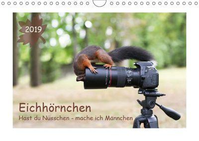 Eichhörnchen - Hast du Nüsschen mache ich Männchen (Wandkalender 2019 DIN A4 quer), Birgit Cerny