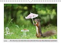 Eichhörnchen - Hast du Nüsschen mache ich Männchen (Wandkalender 2019 DIN A4 quer) - Produktdetailbild 7