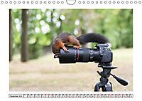 Eichhörnchen - Hast du Nüsschen mache ich Männchen (Wandkalender 2019 DIN A4 quer) - Produktdetailbild 12