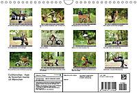 Eichhörnchen - Hast du Nüsschen mache ich Männchen (Wandkalender 2019 DIN A4 quer) - Produktdetailbild 13