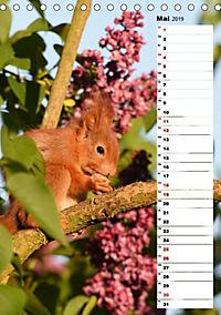 Eichhörnchen - kleine Tiere, große Liebe (Tischkalender 2019 DIN A5 hoch) - Produktdetailbild 2