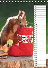 Eichhörnchen - kleine Tiere, große Liebe (Tischkalender 2019 DIN A5 hoch) - Produktdetailbild 3