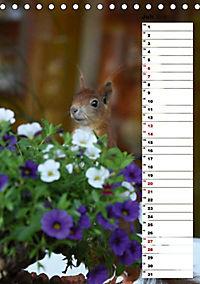 Eichhörnchen - kleine Tiere, große Liebe (Tischkalender 2019 DIN A5 hoch) - Produktdetailbild 5