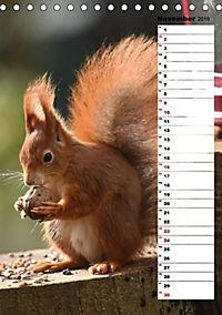Eichhörnchen - kleine Tiere, große Liebe (Tischkalender 2019 DIN A5 hoch) - Produktdetailbild 7