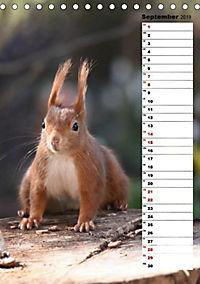 Eichhörnchen - kleine Tiere, große Liebe (Tischkalender 2019 DIN A5 hoch) - Produktdetailbild 8