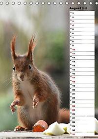 Eichhörnchen - kleine Tiere, große Liebe (Tischkalender 2019 DIN A5 hoch) - Produktdetailbild 9