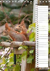 Eichhörnchen - kleine Tiere, große Liebe (Tischkalender 2019 DIN A5 hoch) - Produktdetailbild 10