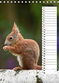 Eichhörnchen - kleine Tiere, große Liebe (Tischkalender 2019 DIN A5 hoch) - Produktdetailbild 11