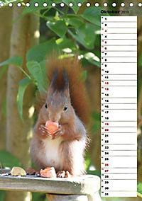 Eichhörnchen - kleine Tiere, große Liebe (Tischkalender 2019 DIN A5 hoch) - Produktdetailbild 12