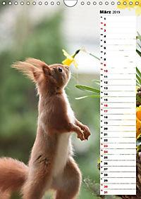 Eichhörnchen - kleine Tiere, große Liebe (Wandkalender 2019 DIN A4 hoch) - Produktdetailbild 3