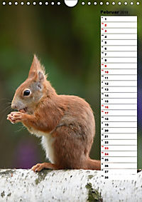 Eichhörnchen - kleine Tiere, große Liebe (Wandkalender 2019 DIN A4 hoch) - Produktdetailbild 2